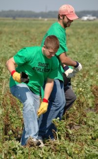 Hobey Baker winner Ryan Duncan, left, and teammate Matt Watkins pick up debris in a potato field near Northwood.